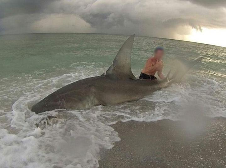 Do not pull sharks onto the beach